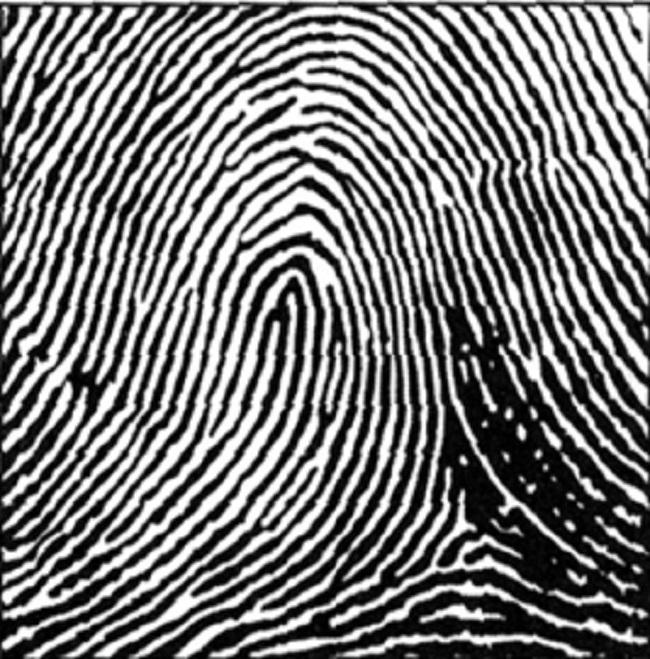 Khám phá những bí ẩn đằng sau dấu vân tay con người